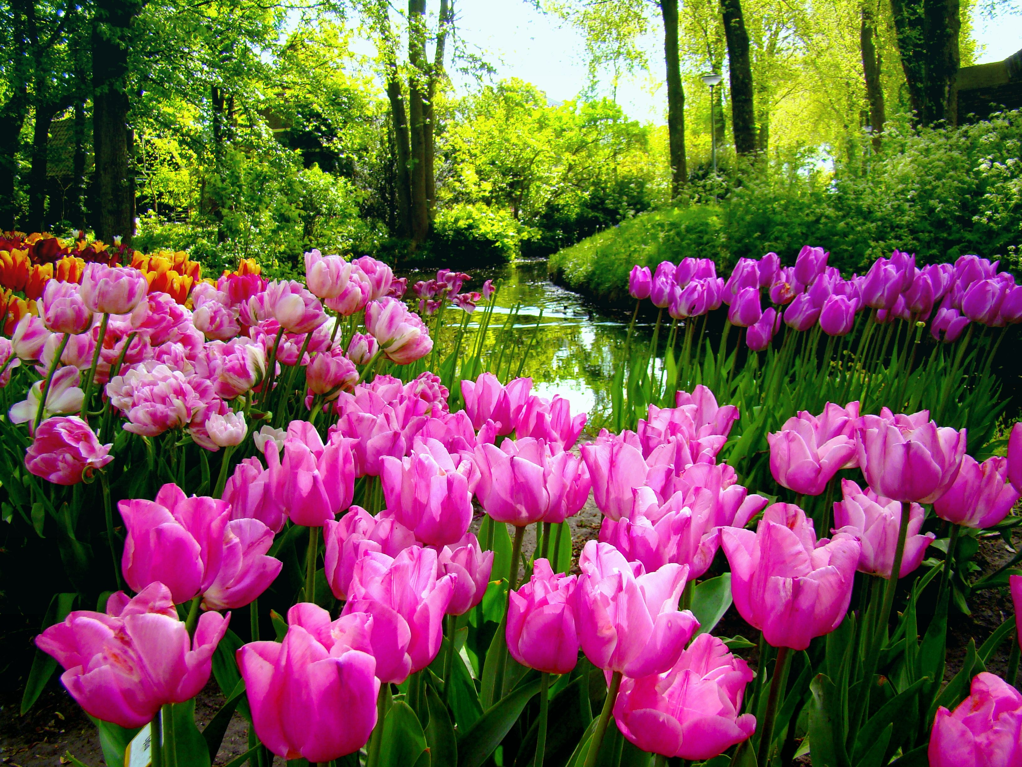 Spring Garden Wallpaper Desktop