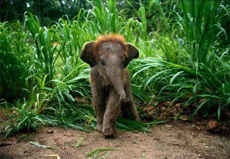If I had a baby elephant, I'd call it Ellie (: