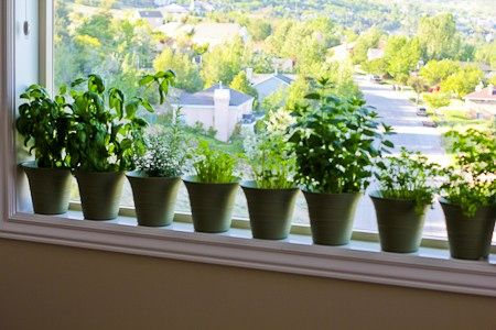 A Container Garden on the Deck and Herbs in the Kitchen Window (2013 Garden Update