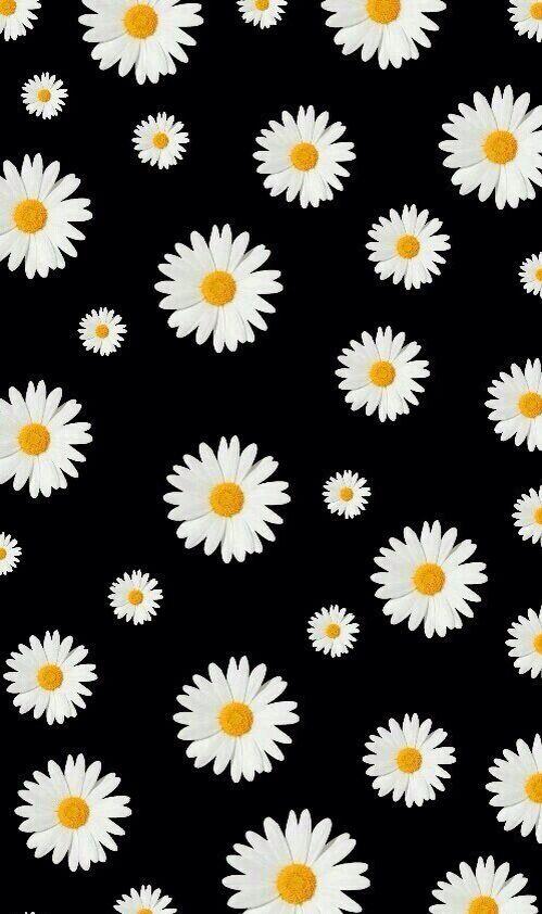 Daisy wallpaper Gambar, Latar belakang