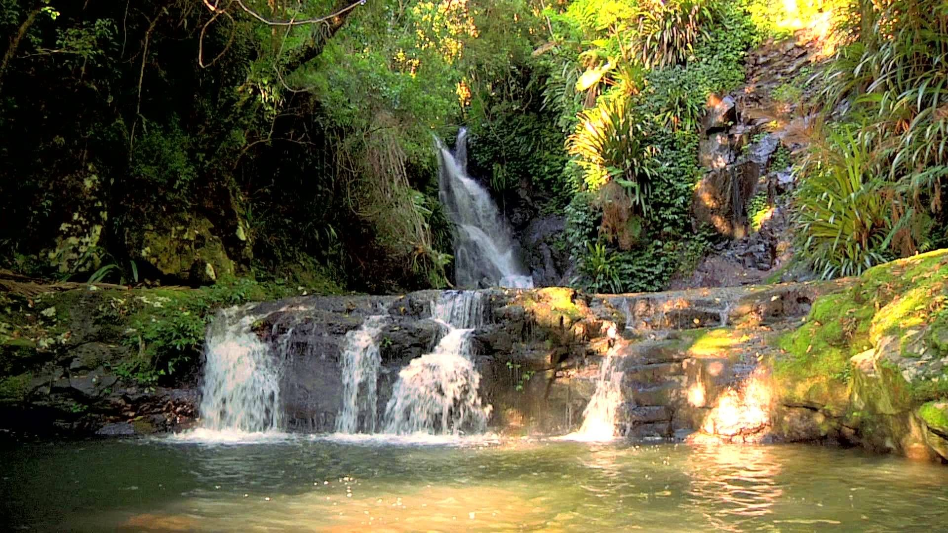 amazon-rainforest-relaxation-video