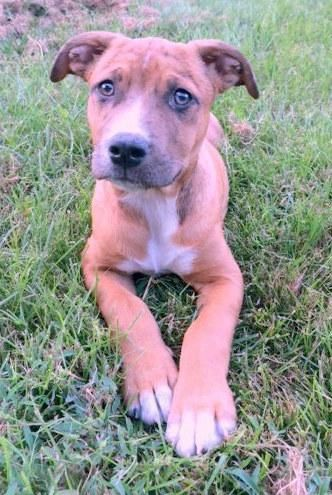 Adopt Cooper on Pet finder, Rescue dogs, Pets