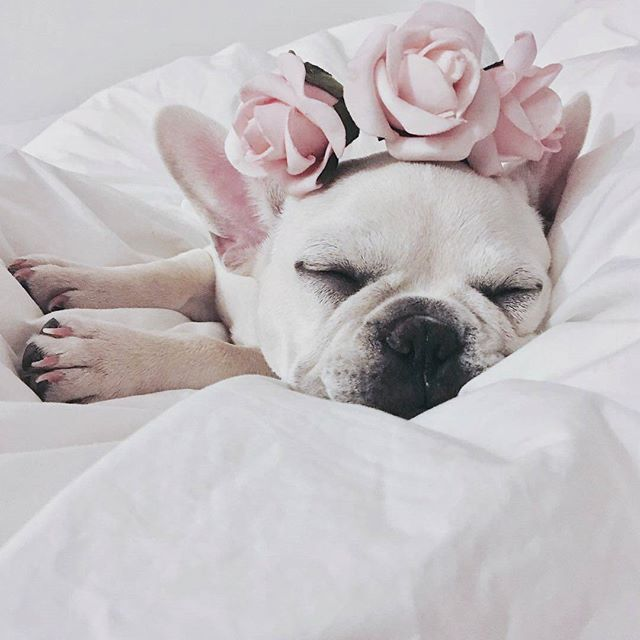 Dogs In Flower Crown Is The Purest Thing Sleeping Dogs French