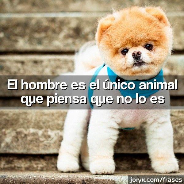 El hombre es el único animal que piensa que no lo es
