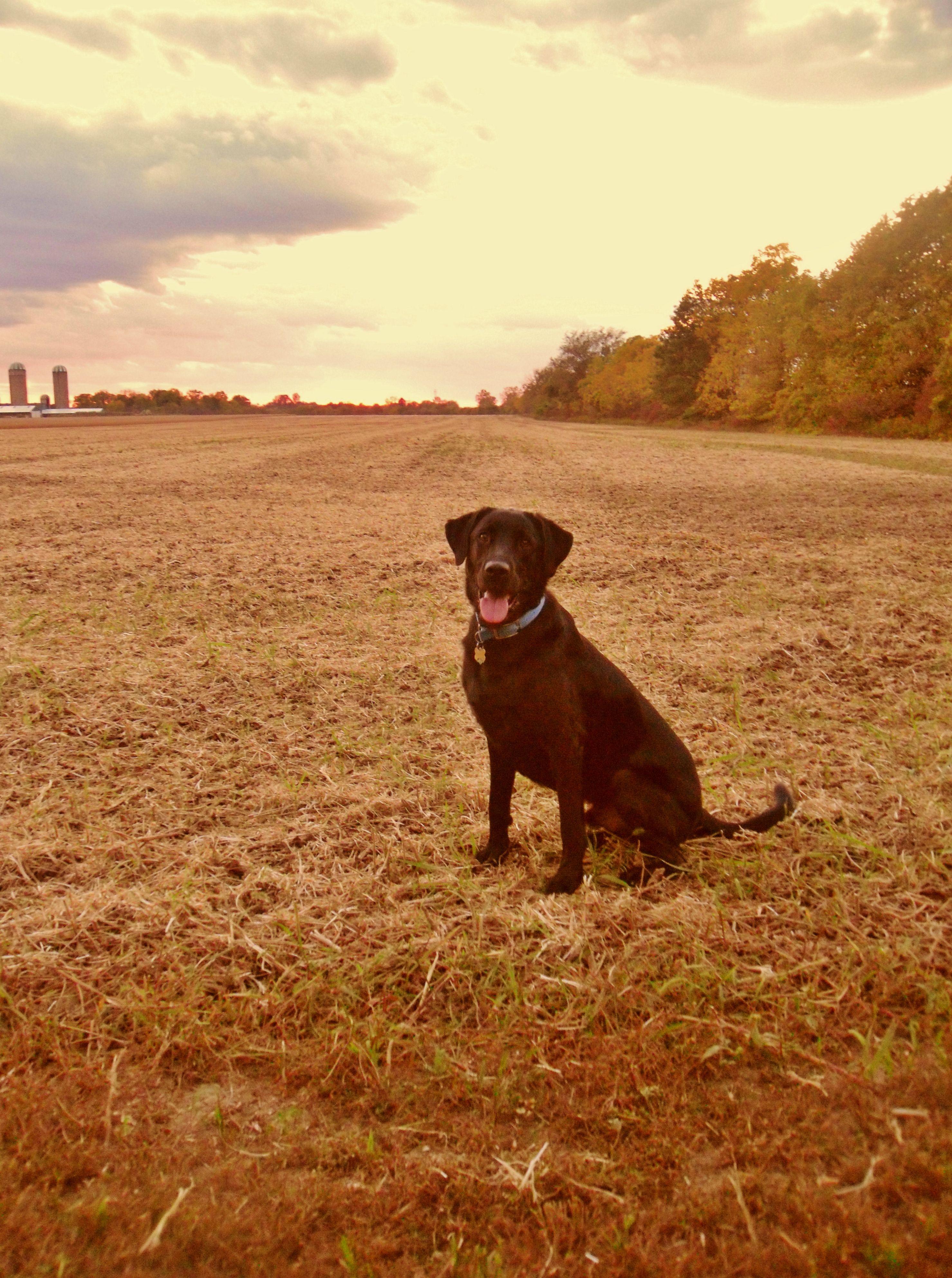 Calvin in the field