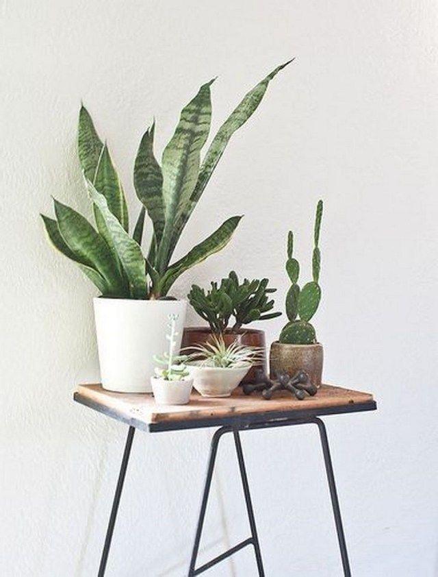 simple house plants indoor decor ideas homedecoration homedecorideas homedecor also home decoration rh pinterest