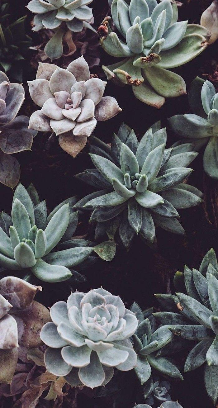 Succulents Cute Iphone Backgrounds Black Background In 2020 Iphone Background Iphone Wallpaper Hipster Plant Wallpaper
