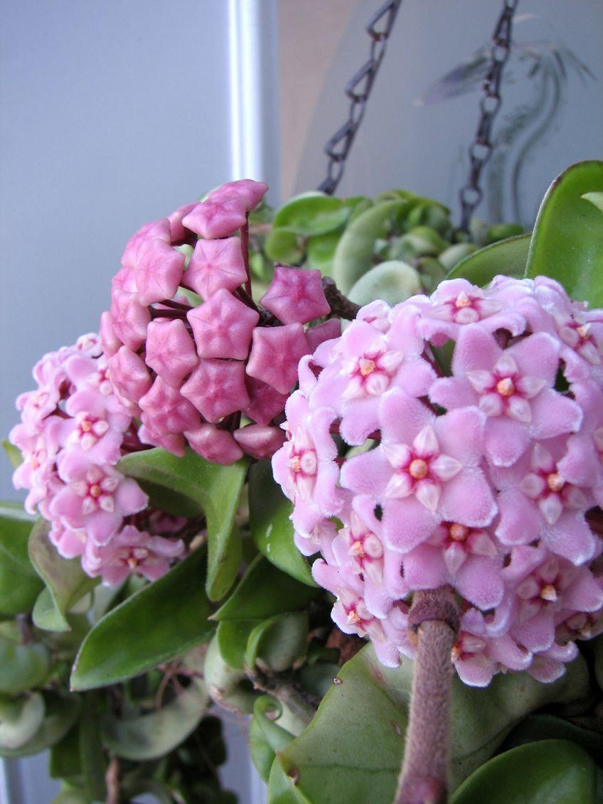 Related image | Gardening | Pinterest