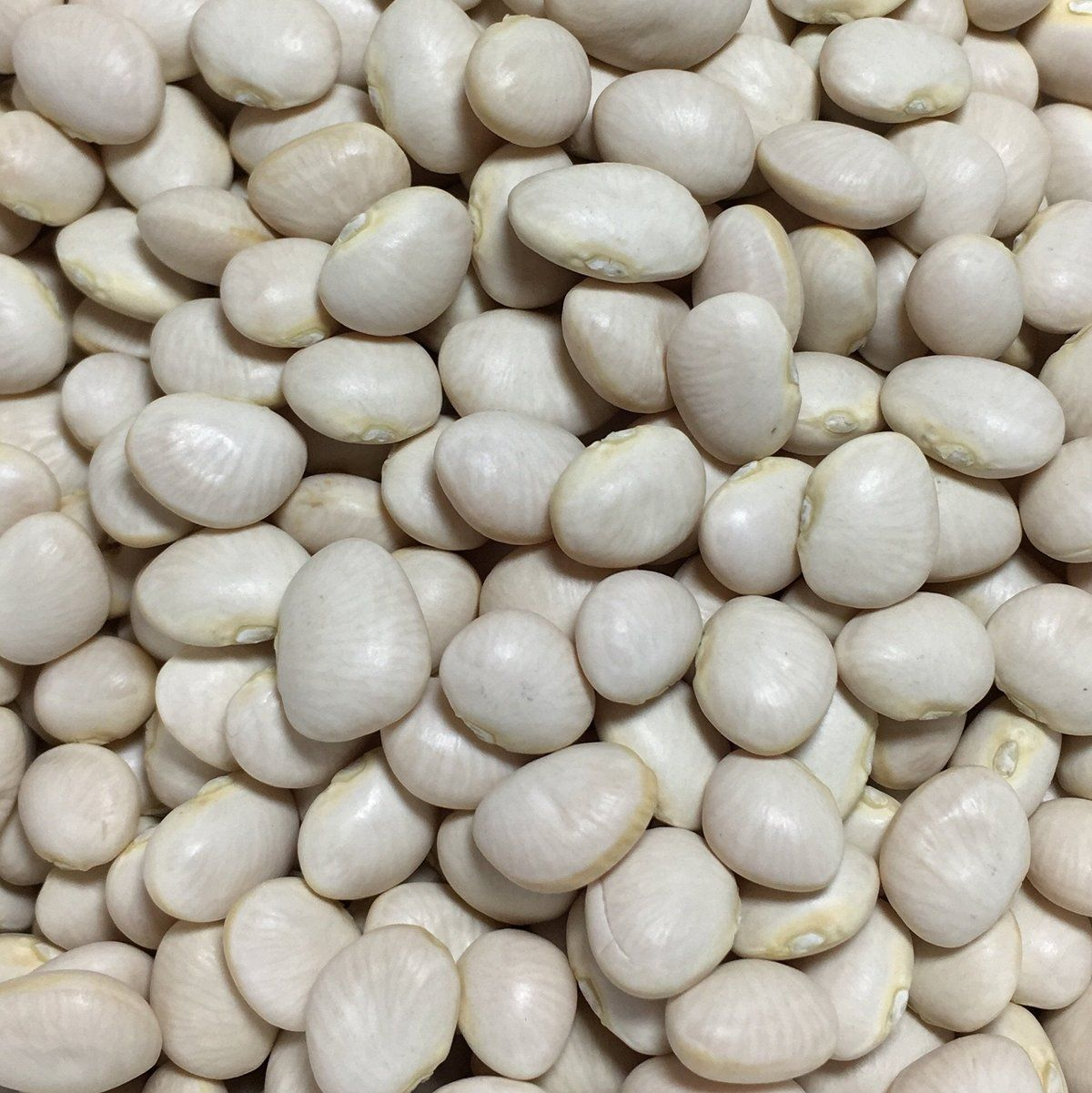 Our Open Pollinated Heirloom Bean Pole Lima White Dixie Butter Pea Phaseolus Vulgaris Seeds Are Guaranteed To Be Non Gmo Beans Pea Beans Bean Varieties
