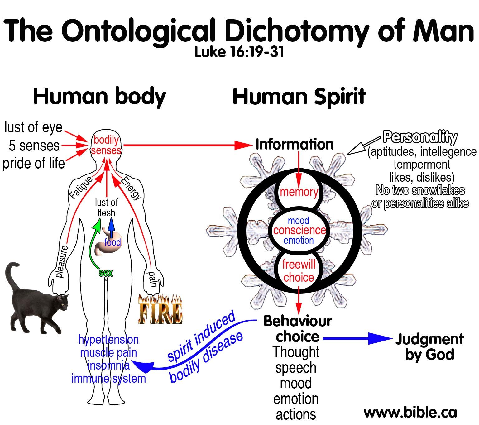 Ontological Trichotomy Of Man Spirit Soul And Body Manual Guide