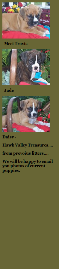 to Hawk Valley Boxers! Puppies, Cute puppies