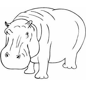 hippo coloring page printable coloring pages