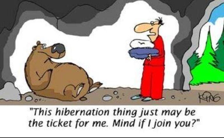 Image result for hibernation cartoon