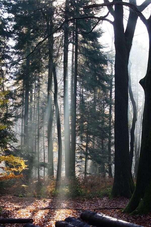 light.jpg by marceltriebel