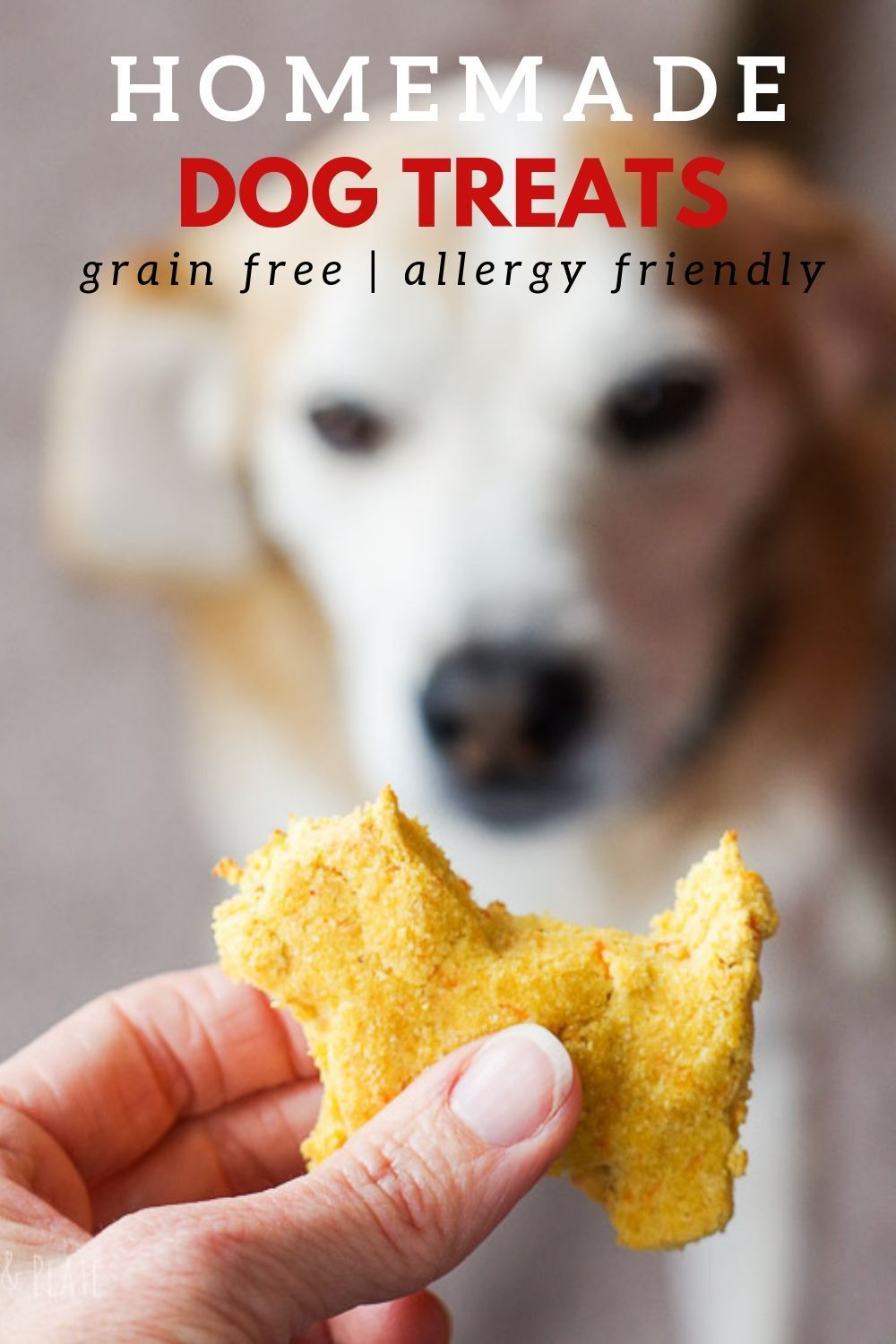 Dogs with Allergies (Grain Free) Recipe Grain free dog