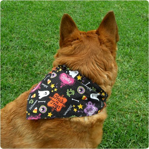 Dogs Stuff - Good Tips To Use When You Need Information About Dogs ...