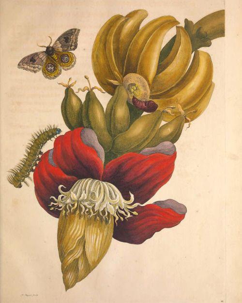 Heaveninawildflower Scientific Illustration Botanical Art Coastal Prints