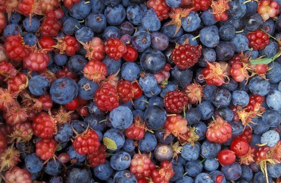 Sweet & Sour Superfoods: The 13 Best Berries in the World