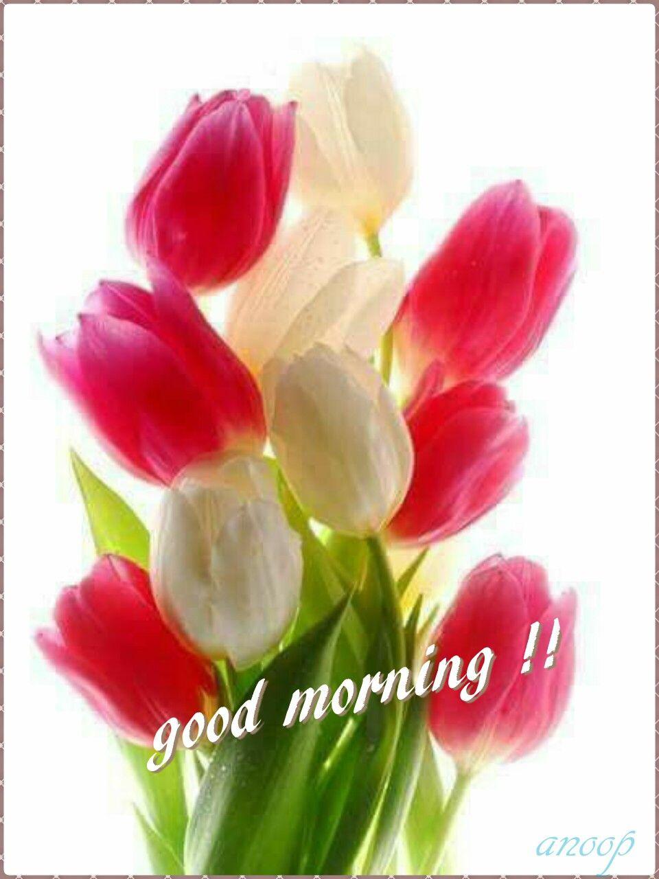 Good Morning Good Morning Good Morning Quotes Morning