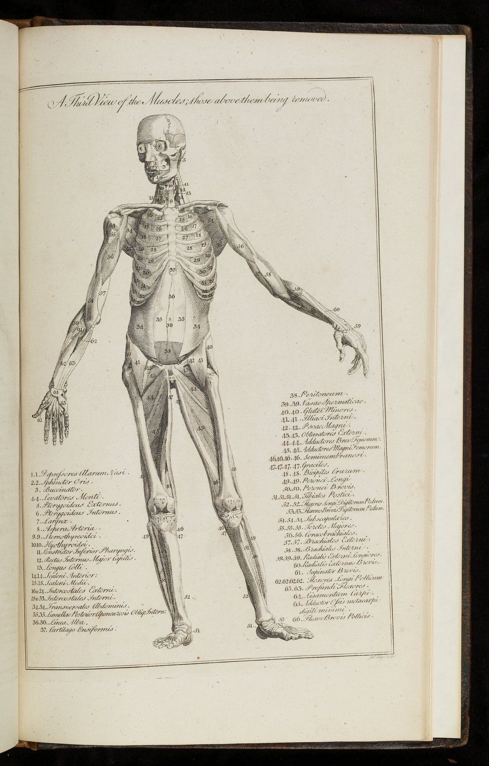 Body Illustration from A new medical dictionary : or, General ...
