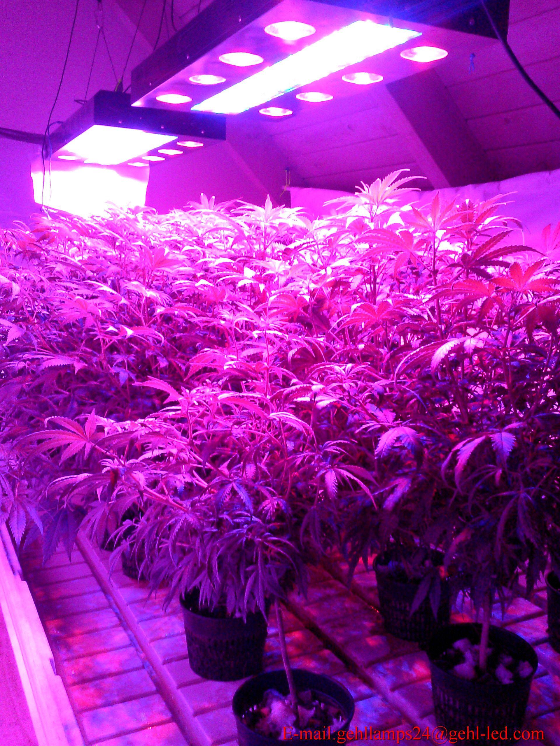Full Spectrum Led Grow Lights Reviews 1000w Led Grow Light Led