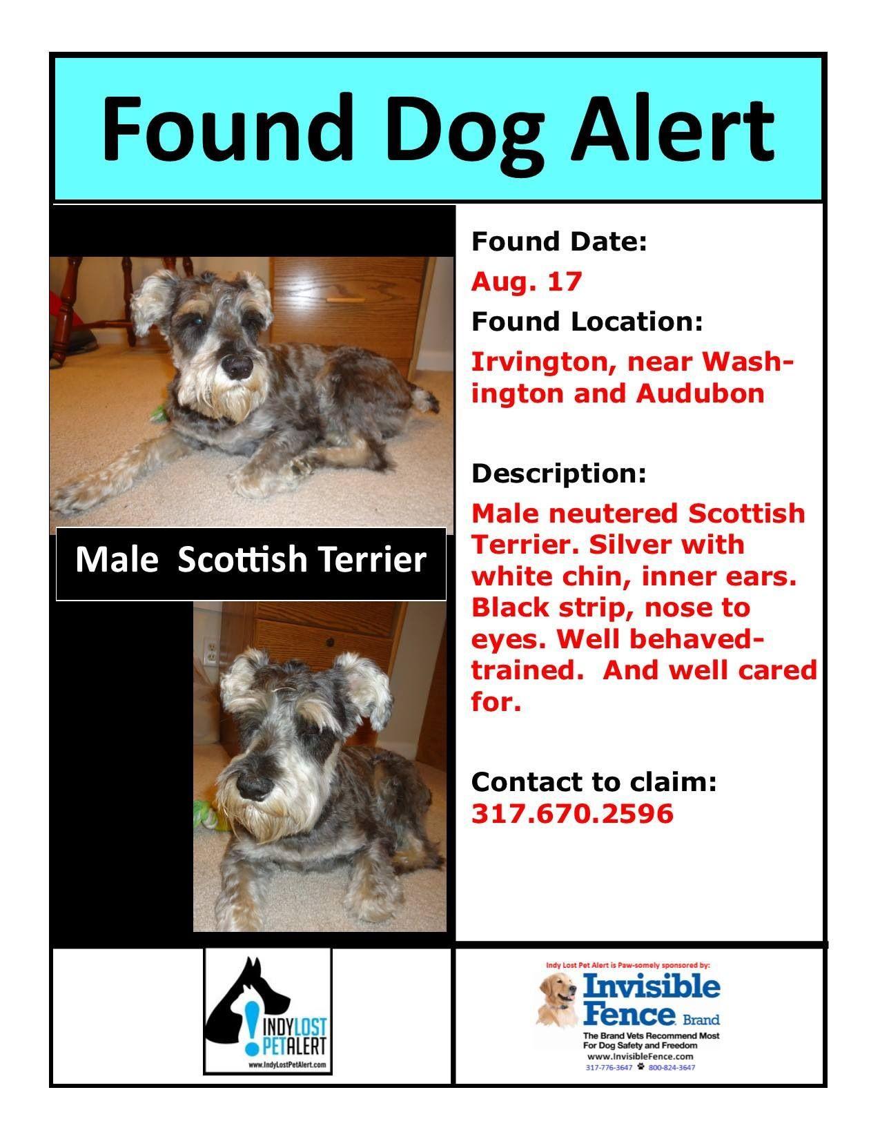 Irvington Indianapolis In Washington And Audubon Founddog 8 17 13 Neutered Male Scottish Terrier Or Schnauzer Https Losing A Dog Irvington Find Pets