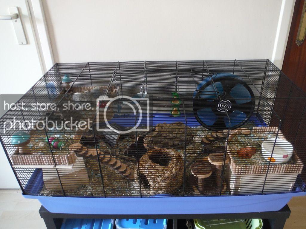 Image Result For Barney Hamster Cage Hamster Cage Hamster Species Hamster