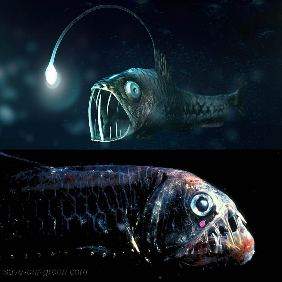 Save Our Green » Viperfish | Animal Kingdom | Pinterest | Deep sea for Deep Sea Fish Name  45jwn