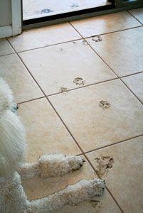 Teach Dog To Wipe Feet No More Muddy Paw Prints On Floor