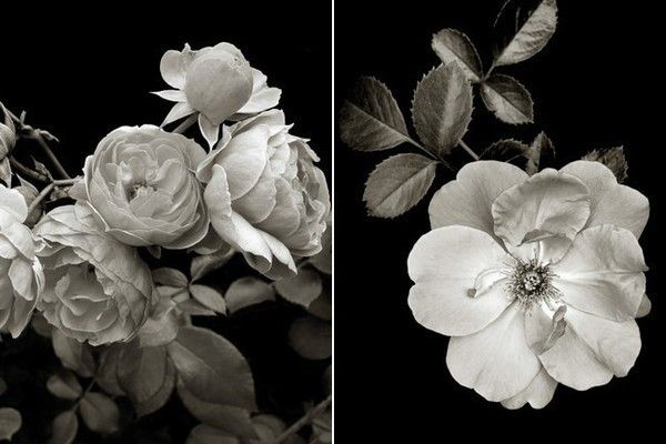 The find black and white botanical prints
