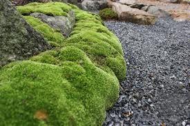 Sammalet poistetaan mullan pinnalta ja maahan lisätään Puutarhakalkkia. Muuallekin kuin kasvimaalle kuuluu tehdä kevätkalkitus. Nurmikolle Nurmikkokalkkia, muualle Puutarhakalkkia. Ainoastaan havukasveille, alppiruusuille, hortensioille ja atsaleoille ei kalkkia laiteta. Happamessa maassa sammaloituminen alkaa todella nopeasti, jopa ensimmäisten syyssateiden aikana, uudellakin pihalla.