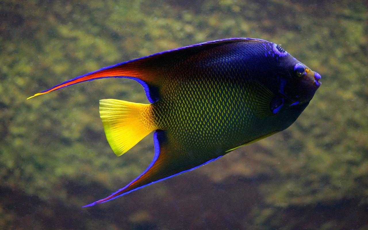 Screensavers Nature S Window Peces De Acuario Hermoso Pez Bajo El Mar