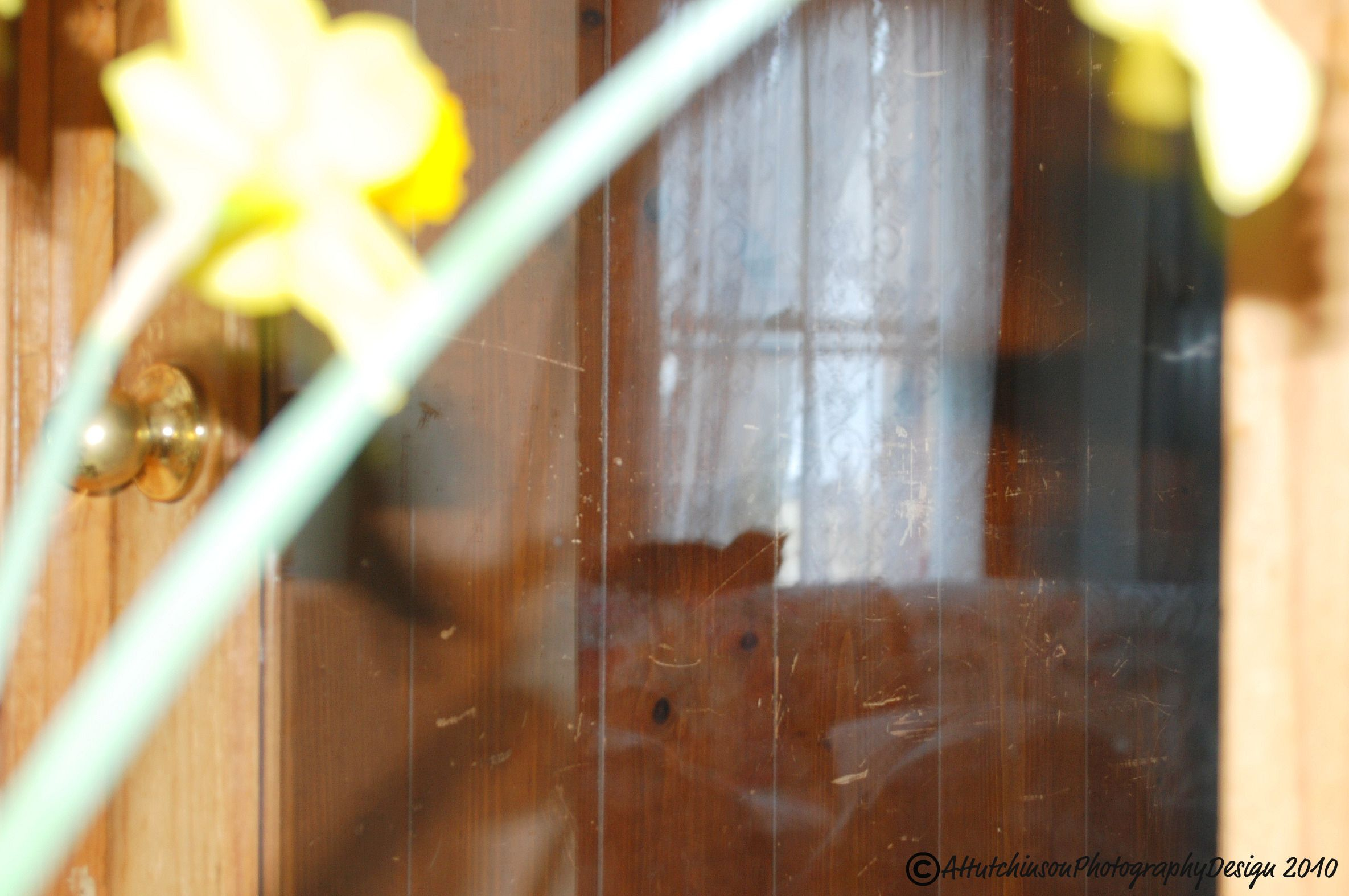 Glass Door Original - Raw no edits  Copyright © AHutchinson Photography™- All rights reserved.
