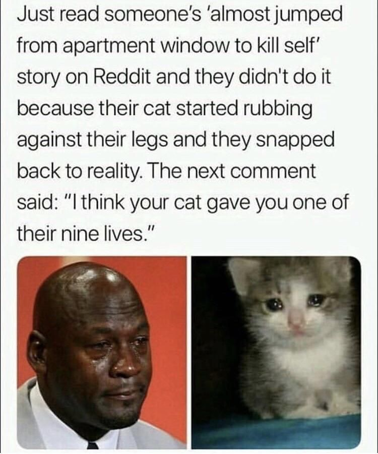 Its Too Early In The Morning For This Http Bit Ly 2s8okdb Memes Cat Memes Cute Stories