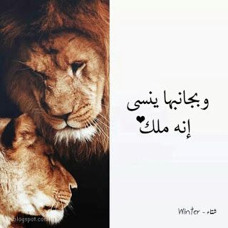صور اسد Lion Pictures Lion Head Tattoos Lion