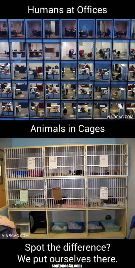 What Is The Difference Between Humans And Animals Human as offices vs animals in cage. Spot the difference? We put ourselves there.   Human as offices vs animals in cage. Spot the difference? We put ourselves there.