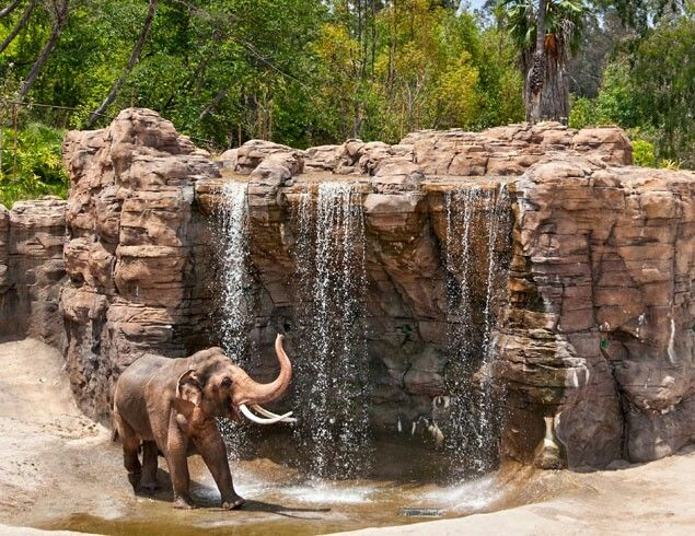 Pin By Ryan Brown On Creatures Of The Zoo Iii Zoo Architecture Elephant Zoo World Elephant Day