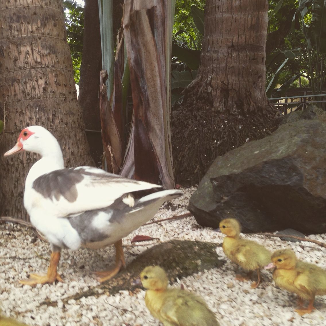 This happy family is also part of our newest Team Members from the Tropical Gardens. #CaribeHilton #PuertoRico  #seepuertorico