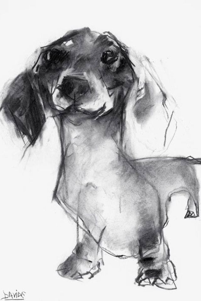Beautiful Dachshund Drawing In Charcoal By Uk Artist Valerie