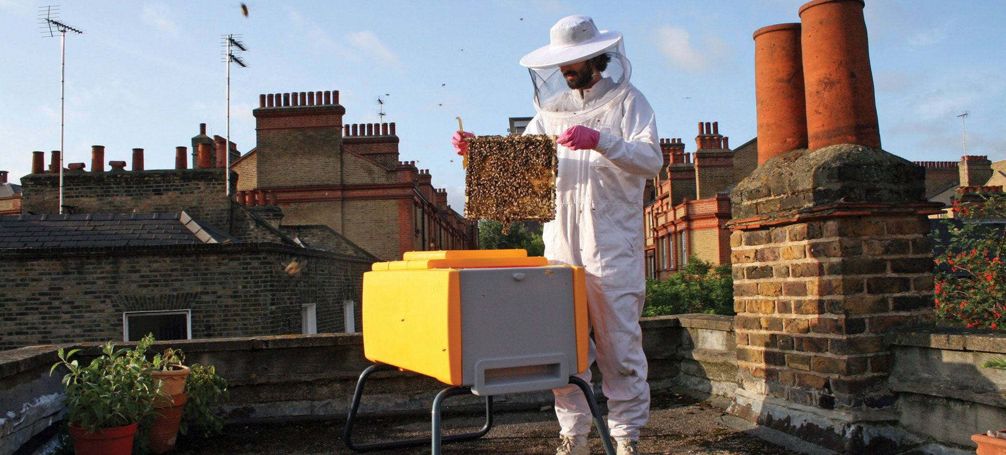 Deutschland summt - werden Sie mit dem Beehaus zum ...
