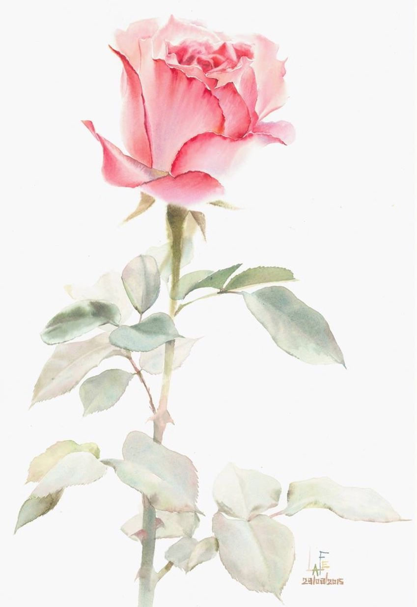 Watercolor without drawing by LAFE | Roses | Pinterest | Aquarell ...