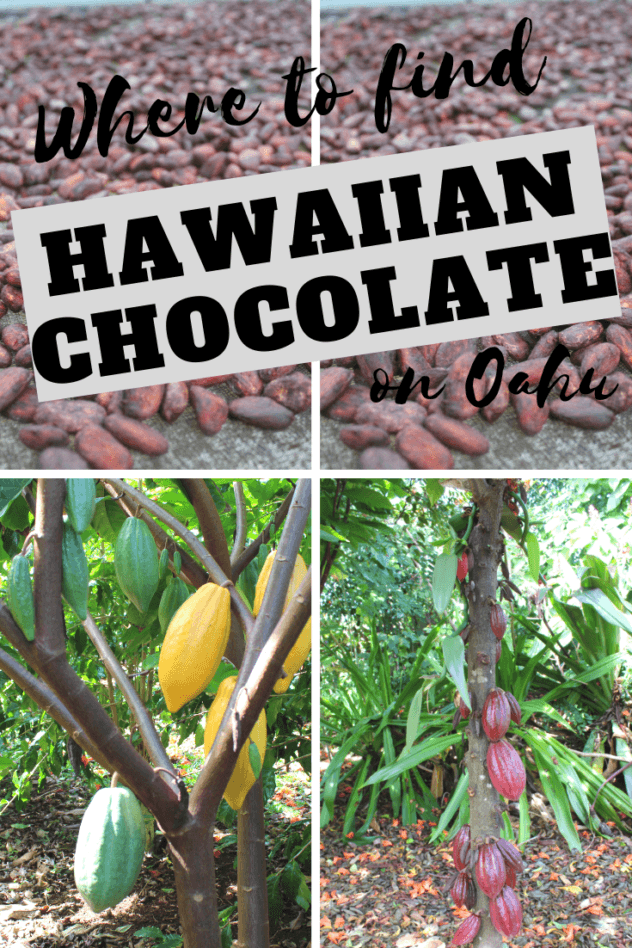 The chocolate fruit is one of the most unique things you can try while visiting Oahu especially if you can take a daytrip from Honolulu you can only find it on a Hawaiian...