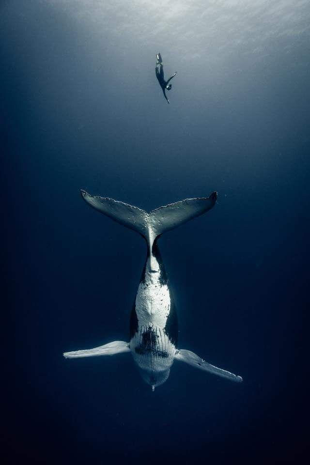 Pin By Karen V On Paysages Ocean Creatures Ocean Animals Sea Animals