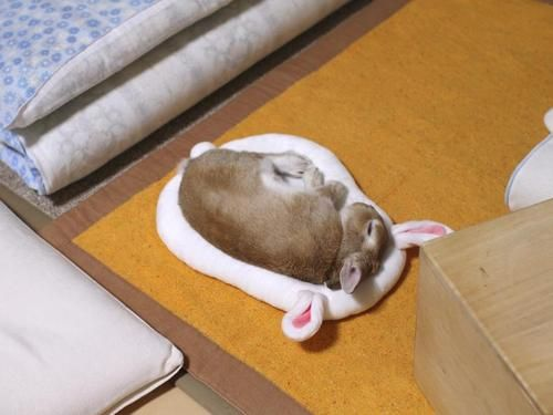 Rabbit sleeping on rabbit bed lol