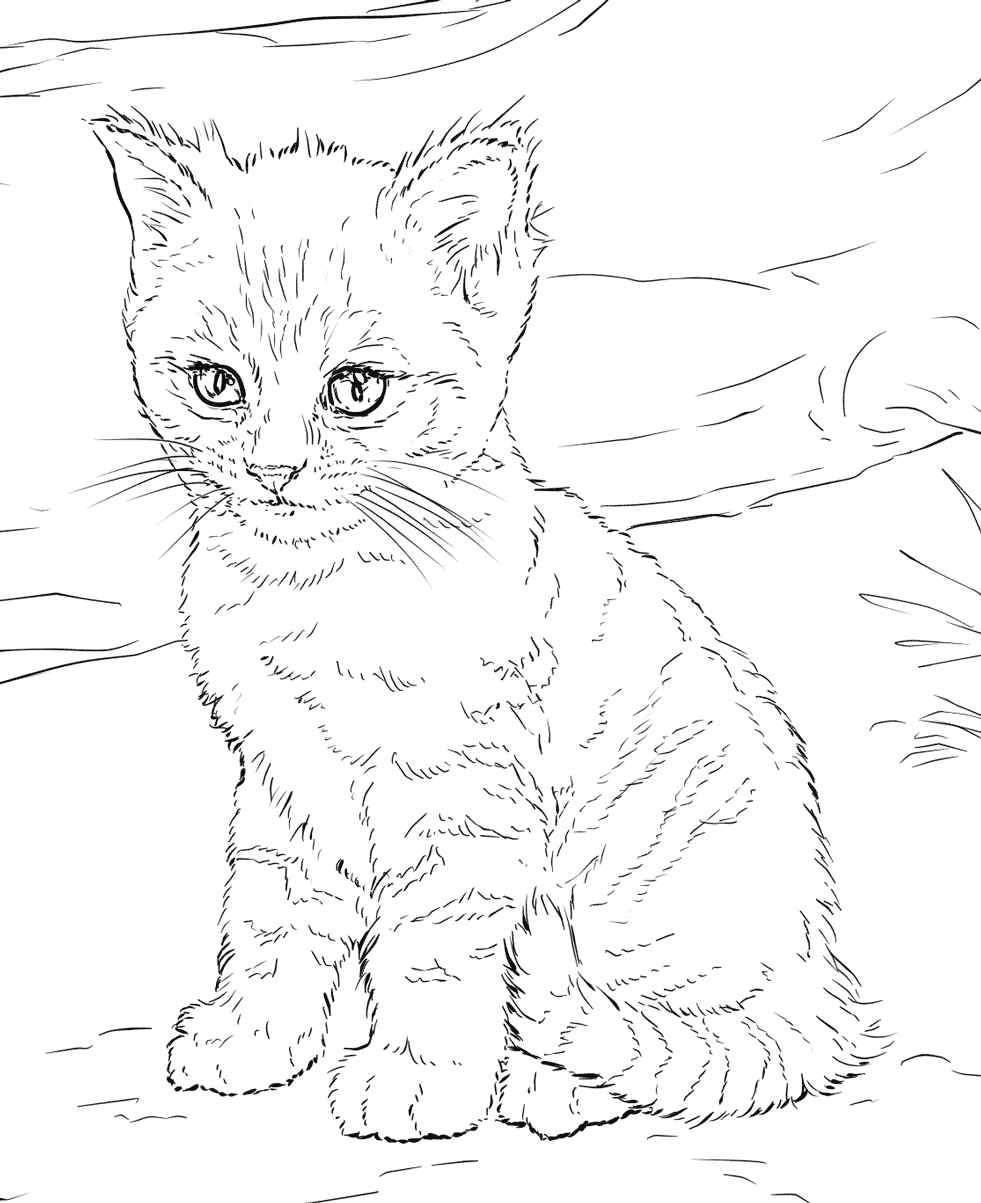 Cat Coloring Pages For Adults Cat Coloring Book Kitten Coloring