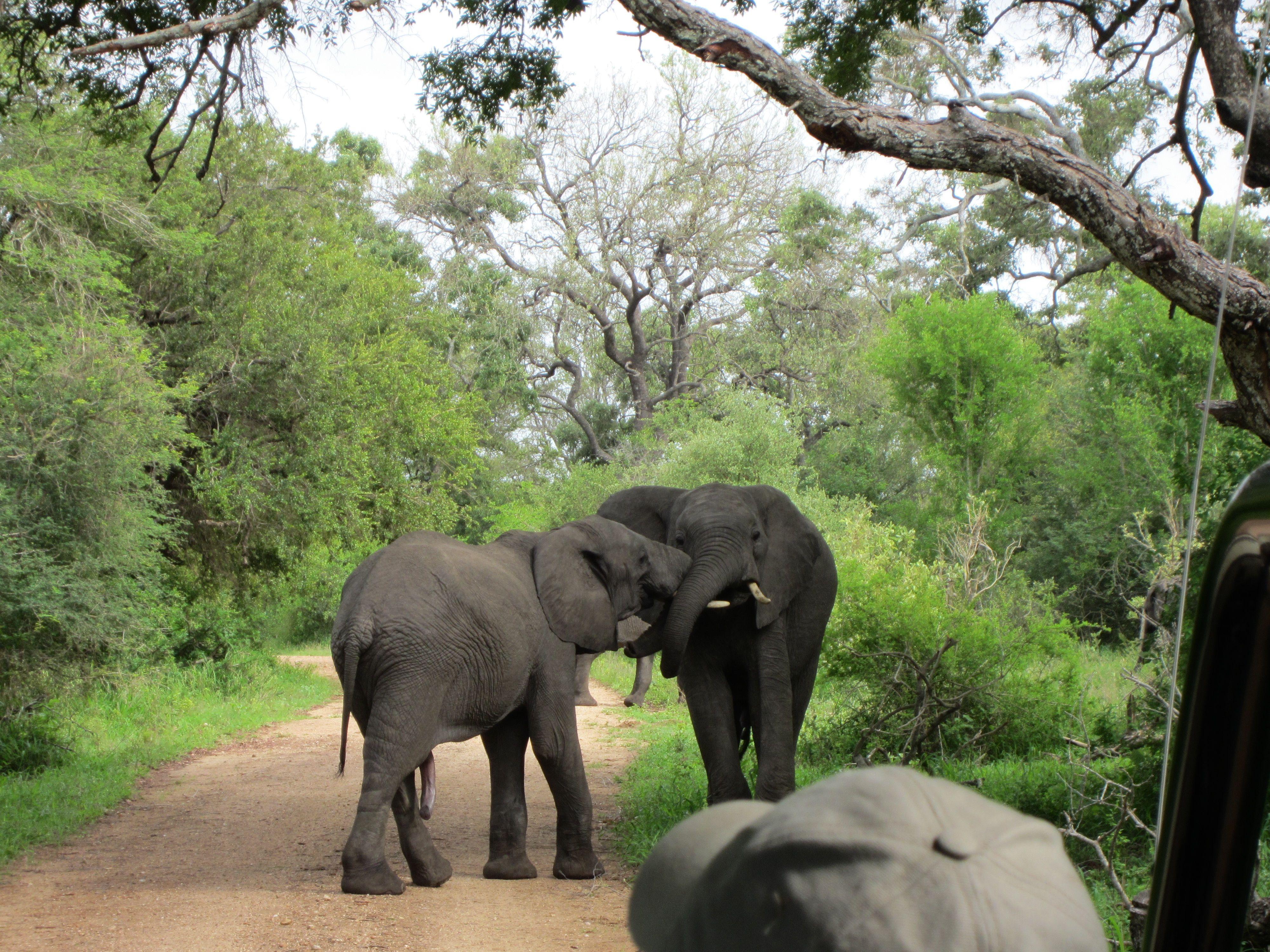 Kruger National Park South Africa Kruger National Park National Parks Travel Around The World