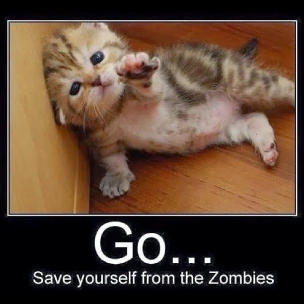 Cute And Funny Cat Posters Cute Animal Photos Funny Cat