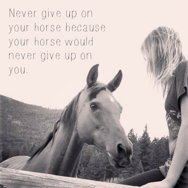 Never Give Up On Your Horse Because Your Horse Would Never
