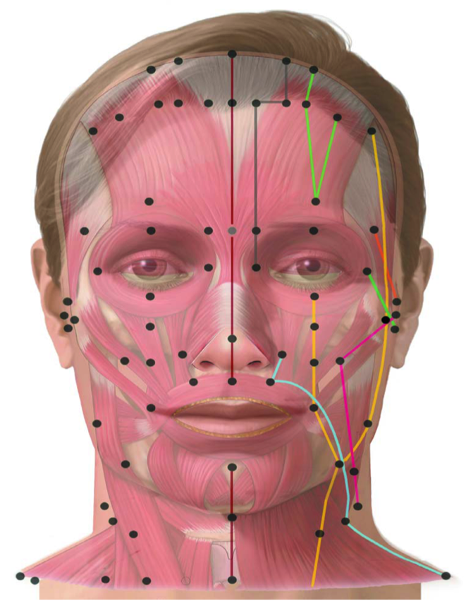 Meridians of the Face | Acupunture, Acupuncture, Neck ...