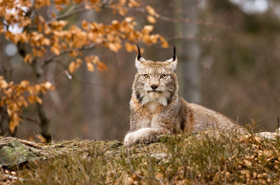 Sunbathing ) by Jan Pelcman, 500px Animals wild